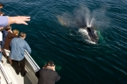 Whalewatching at Channel Islands NP. Photo by Tim Hauf: 1024x682.66666666667