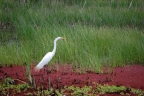 Egret at Cosumnes River Preserve. Photo by Josette Buriani: 1024x680.85106382979