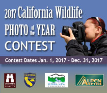 2017 California Wildlife Photo of the Year Contest