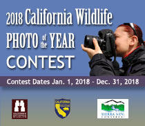 2018 California Wildlife Photo of the Year Contest